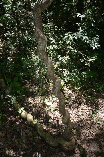 Zanimivo drevo ob poti