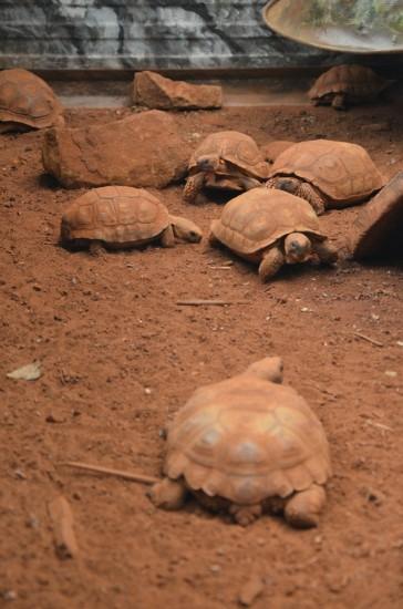 Želve v zavetišču Guira Oga